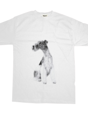 Fox Terrier Drawing