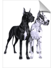 Great Danes Drawing