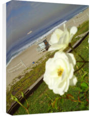 Flora on the Strand II - Manhattan Beach