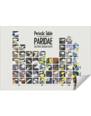 Periodic Table of Paridae (aka Tits)